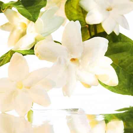 Mùi hương của Mon Guerlain Intense có Hoa oải hương